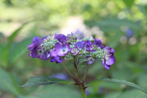 庭のお花たち♪_c0090198_17394802.jpg