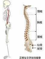 多くの人が感じている腰痛原因を探って対策をしよう_b0179402_23352367.jpg