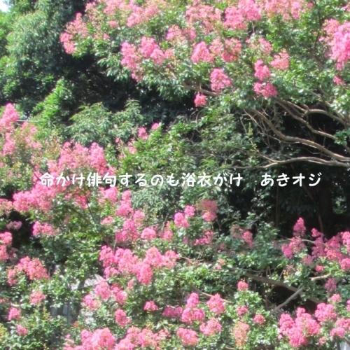 f0117041_14353469.jpg