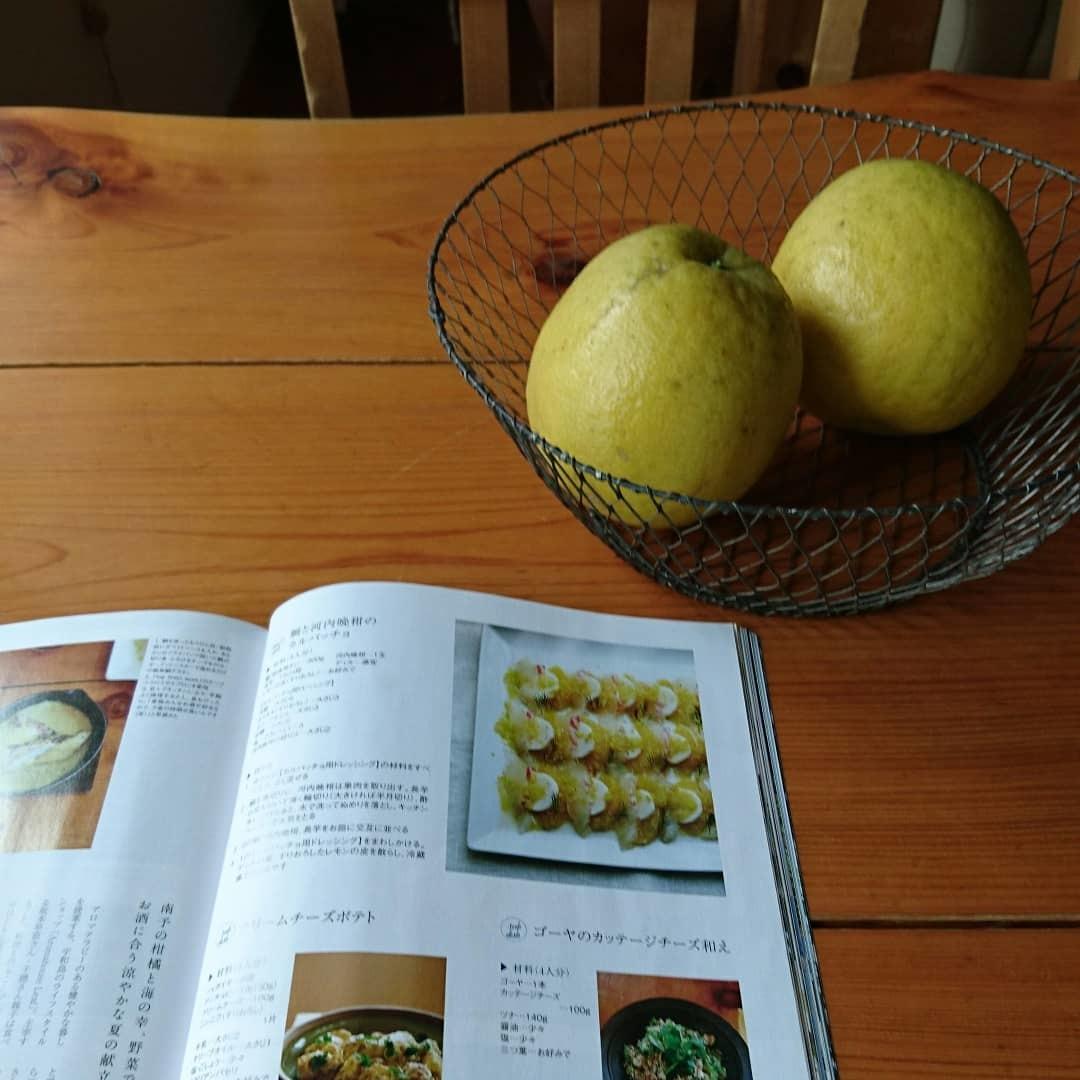 河内晩柑_c0172049_16342627.jpg