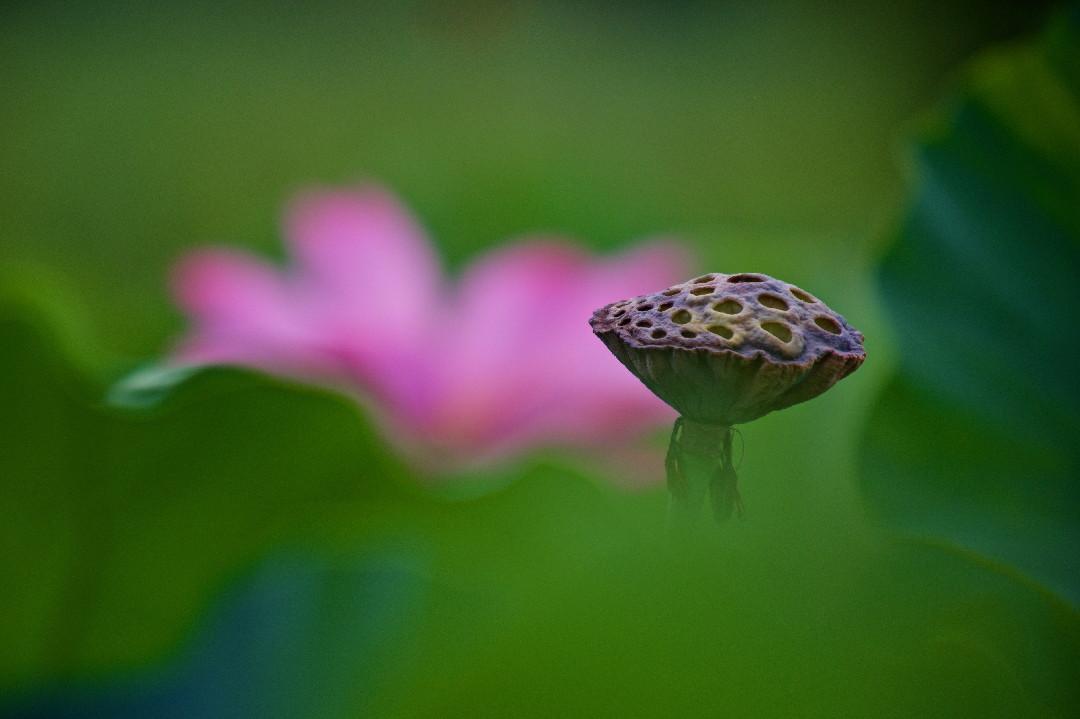 花より果托_e0071967_826180.jpg