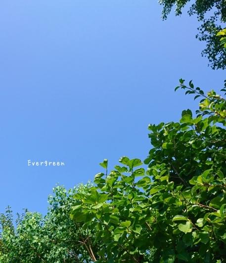 夏の色と蝉の声。_d0362666_16322759.jpg
