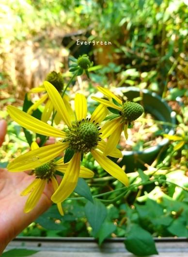 夏の色と蝉の声。_d0362666_16330458.jpg