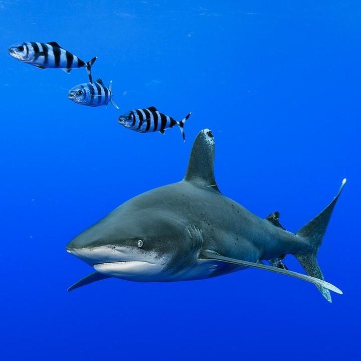 サメは話を詰める詰める_c0093101_20294841.jpg