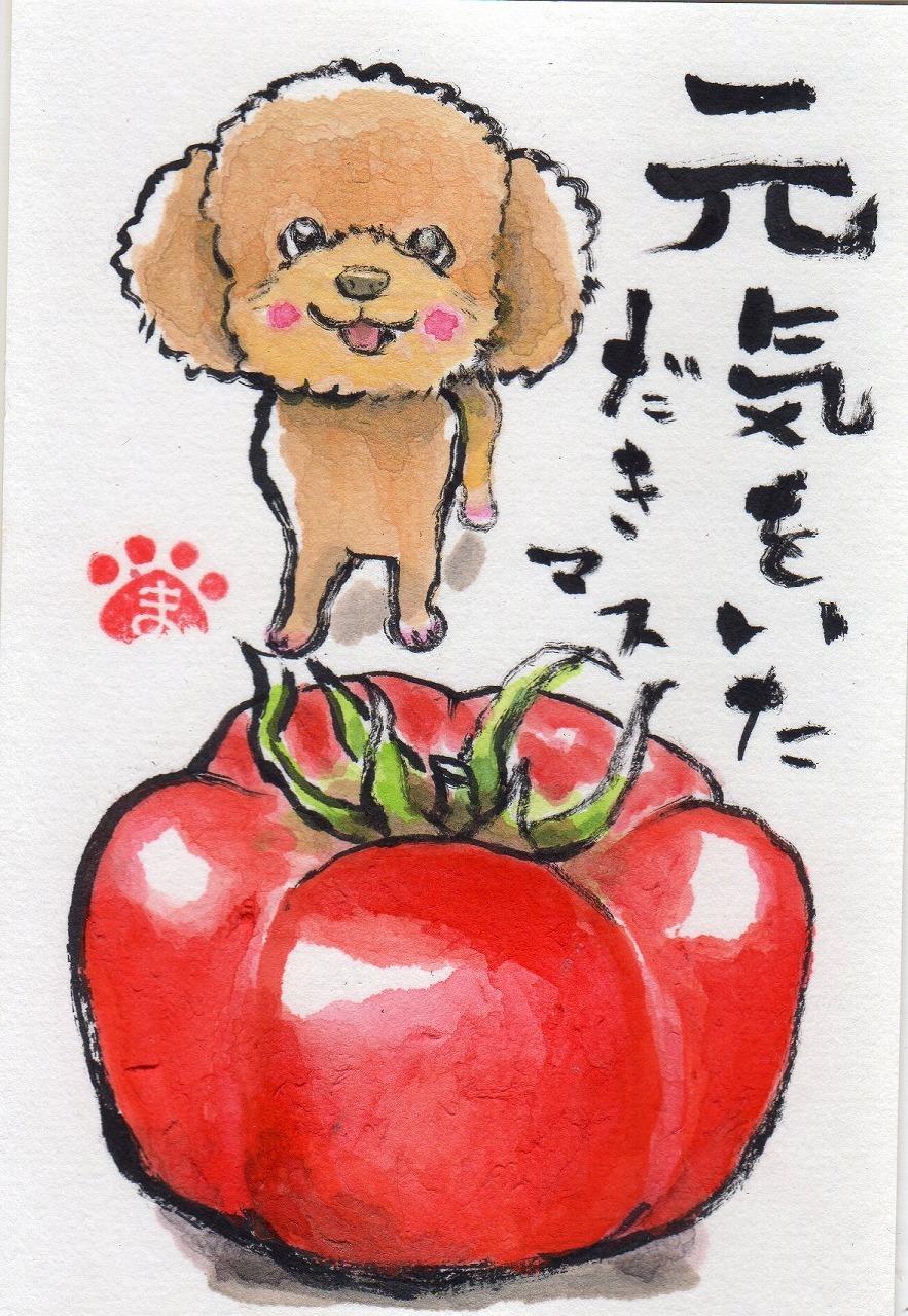 もずくちゃんとトマト、そらうみちゃん_f0375804_07001244.jpg