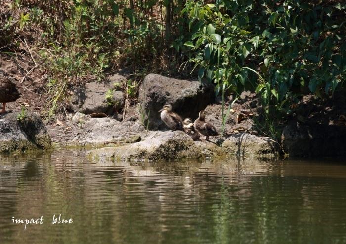 河川敷から、河川敷公園(^^)/_a0355908_19524597.jpg