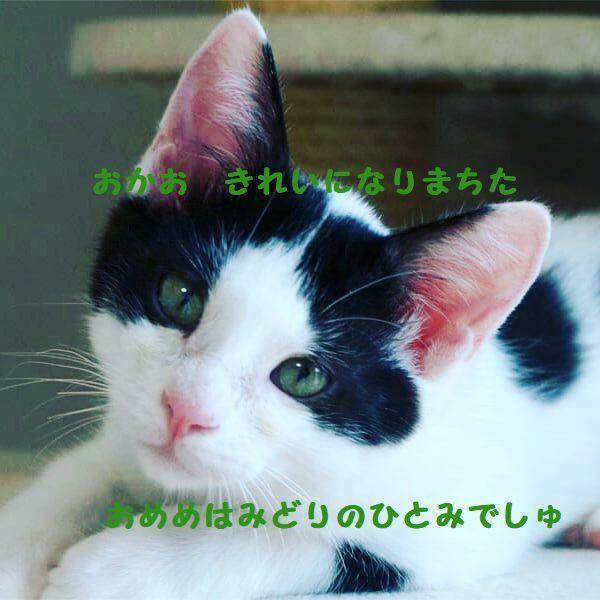d0393041_10403949.jpg