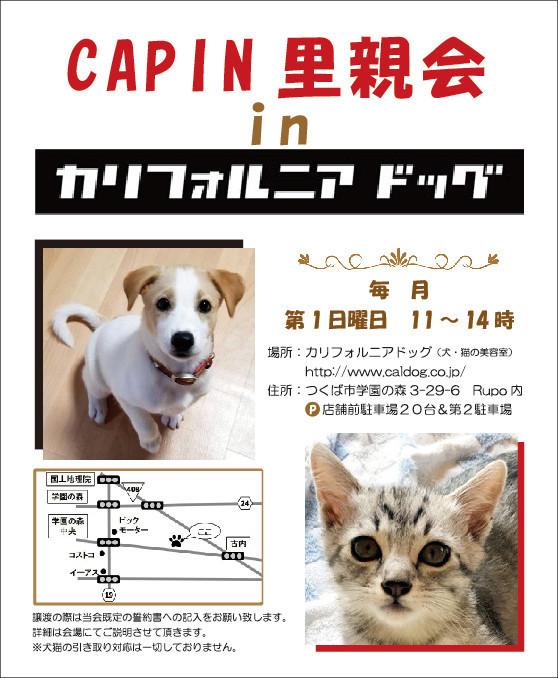 音ちゃん2週間経過♪ & CAPINさんの活動・譲渡会のご紹介!_f0121712_15501805.jpg