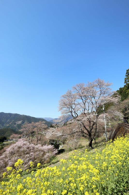 中津明神山 → ひょうたん桜公園_a0077663_08235964.jpg