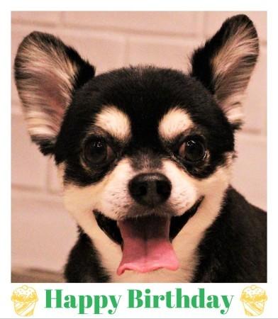 Happy Birthday ♡ ベルちゃん_d0060413_18275922.jpg