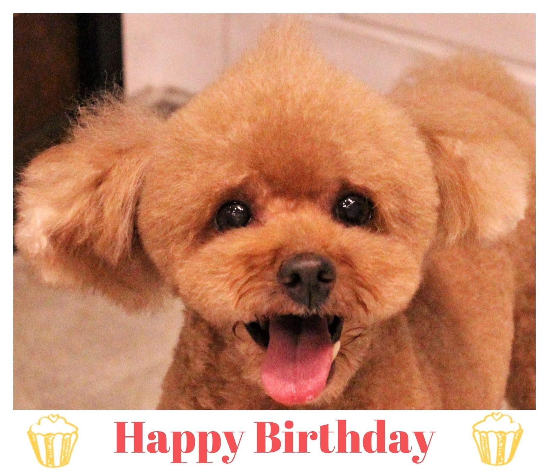 Happy Birthday ♡ レオナちゃん_d0060413_18334623.jpg