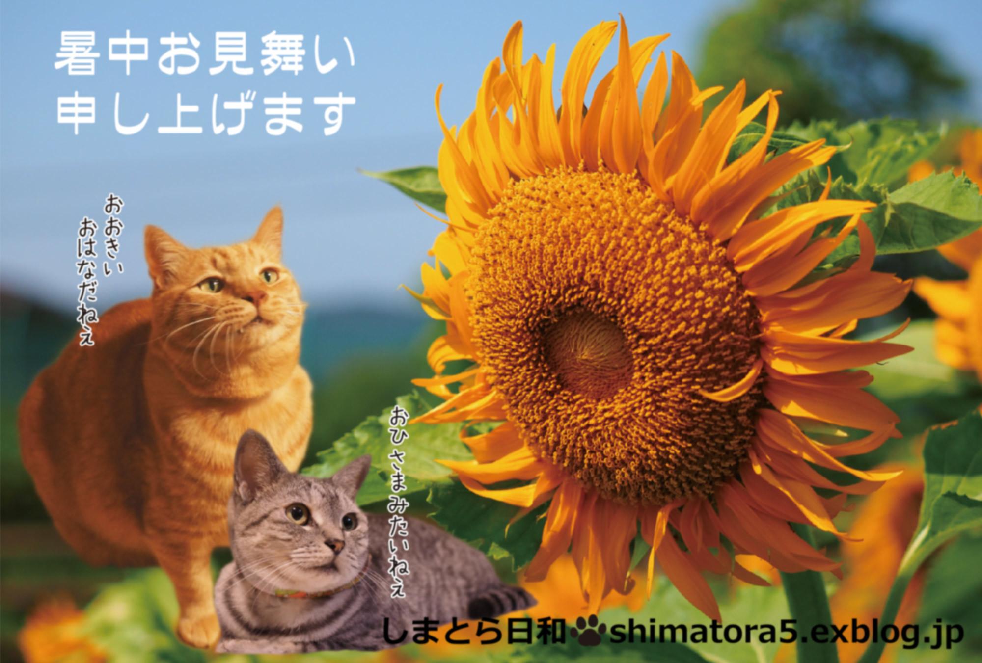 c0356722_22525121.jpg