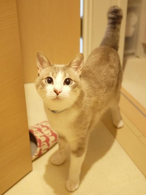 猫のお留守番 カフカくん編。_a0143140_22440028.jpg
