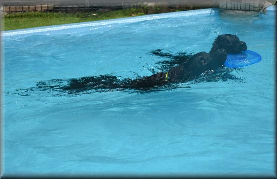 午後もプールで・・・_f0363141_08261513.jpg