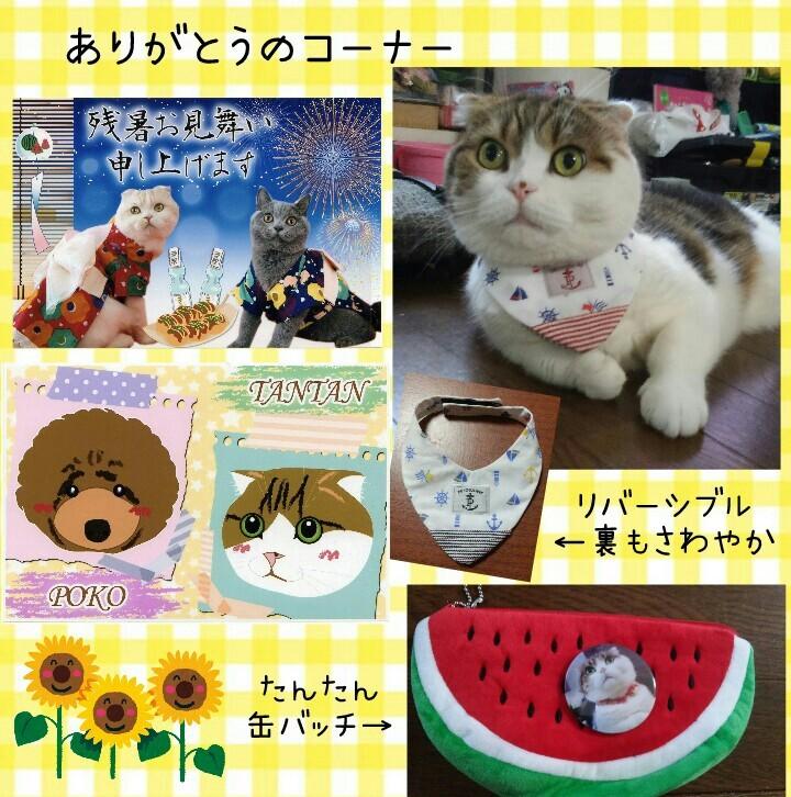 パイナップルトラちゃん_f0375804_08271888.jpg