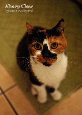 能ある猫はツメを隠す?_b0253205_05320471.jpg