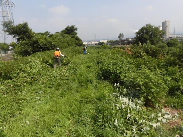 続く猛暑の中 「そうだ!沼川プロジェクト」で本年度2回目の滝川の草刈り清掃_f0141310_06491258.jpg