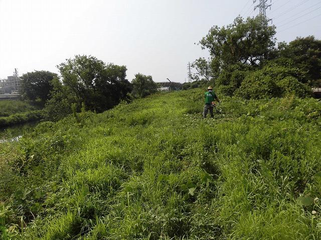 続く猛暑の中 「そうだ!沼川プロジェクト」で本年度2回目の滝川の草刈り清掃_f0141310_06491918.jpg