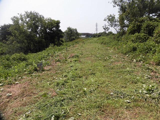 続く猛暑の中 「そうだ!沼川プロジェクト」で本年度2回目の滝川の草刈り清掃_f0141310_06492639.jpg