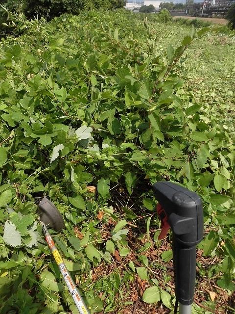 続く猛暑の中 「そうだ!沼川プロジェクト」で本年度2回目の滝川の草刈り清掃_f0141310_06494400.jpg