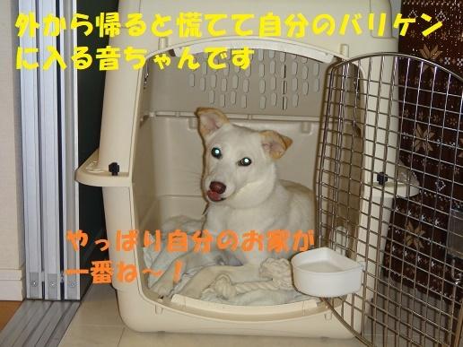 f0121712_10470102.jpg