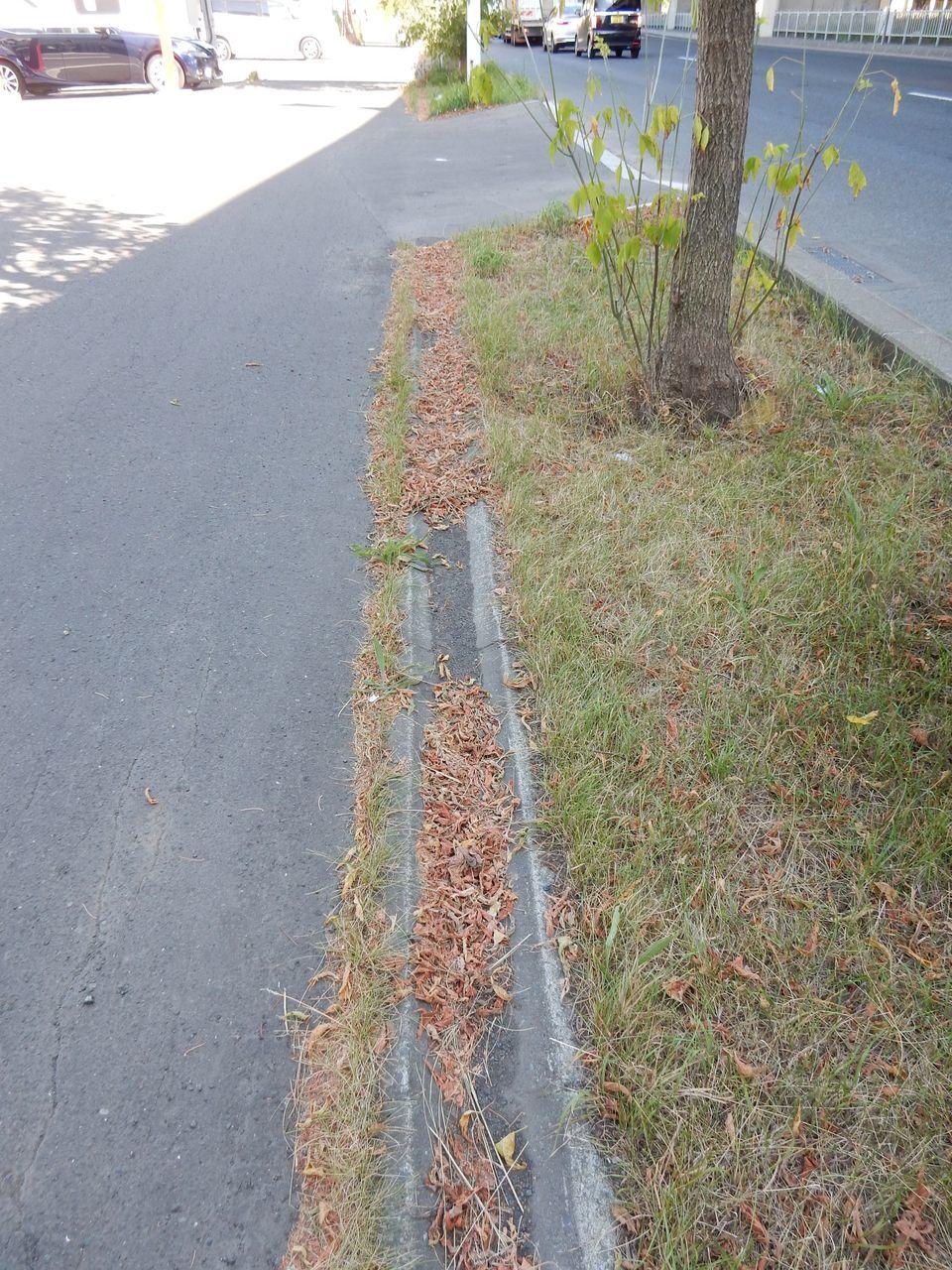 水不足で葉を落とす街路樹_c0025115_22194204.jpg