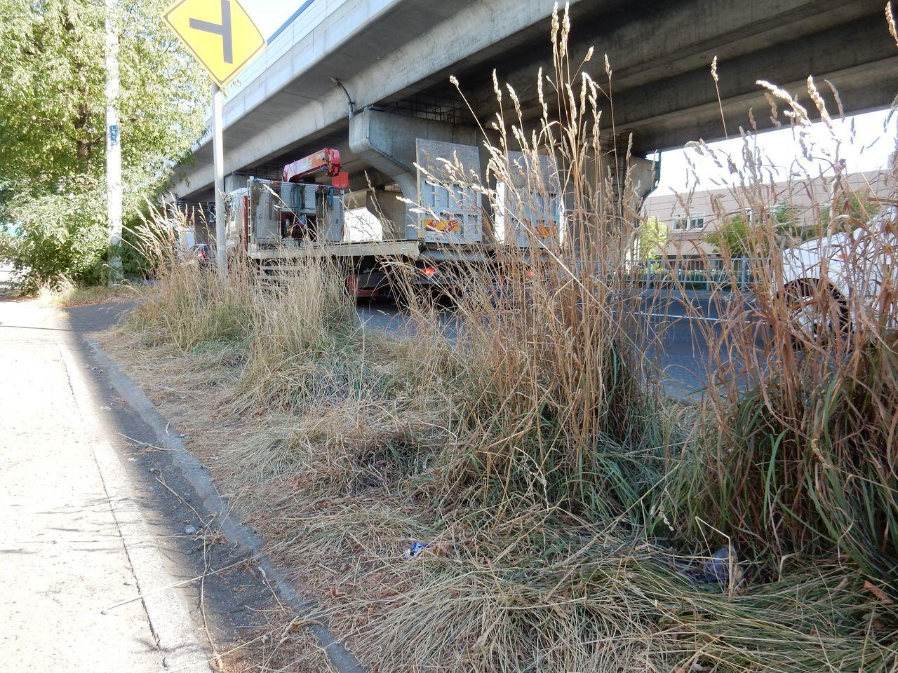 水不足で葉を落とす街路樹_c0025115_22195105.jpg
