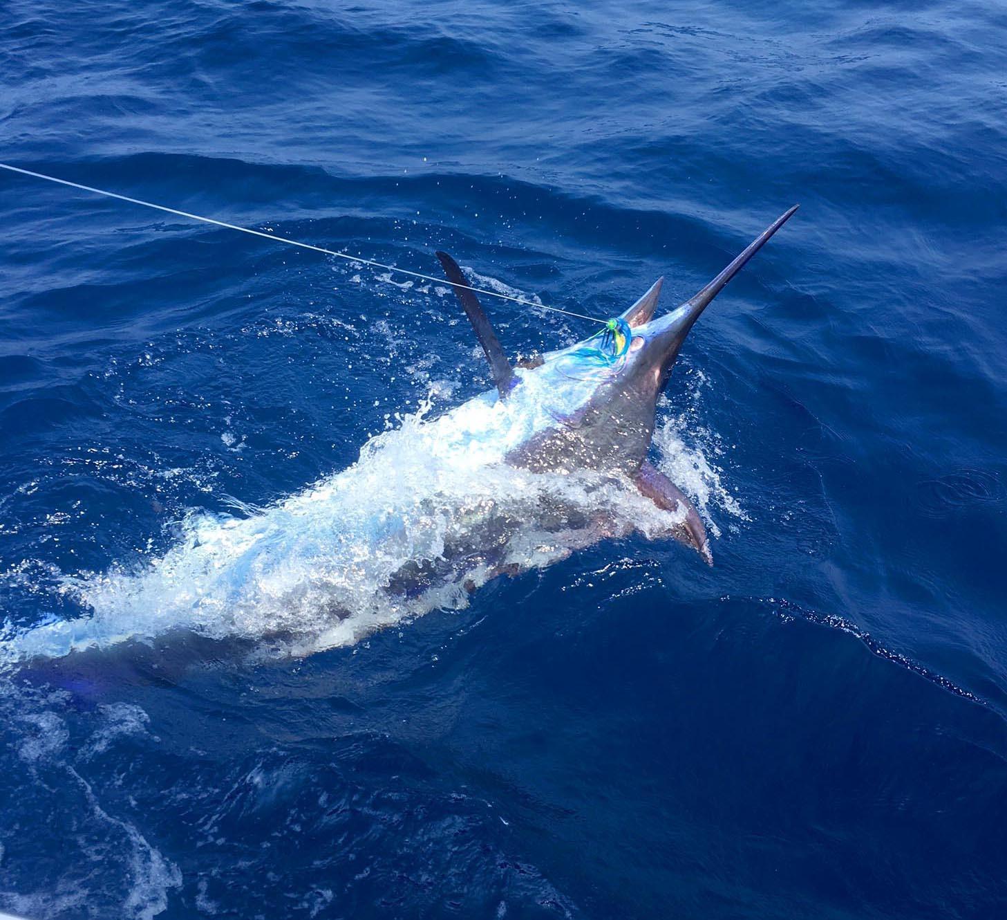 8月最初の土日は全国で釣れまくり3東日本編_f0009039_18401257.jpg