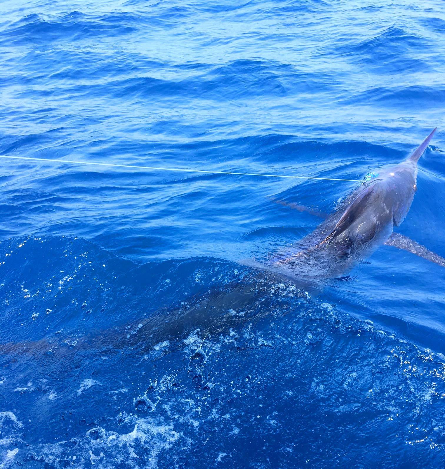 8月最初の土日は全国で釣れまくり3東日本編_f0009039_18402419.jpg
