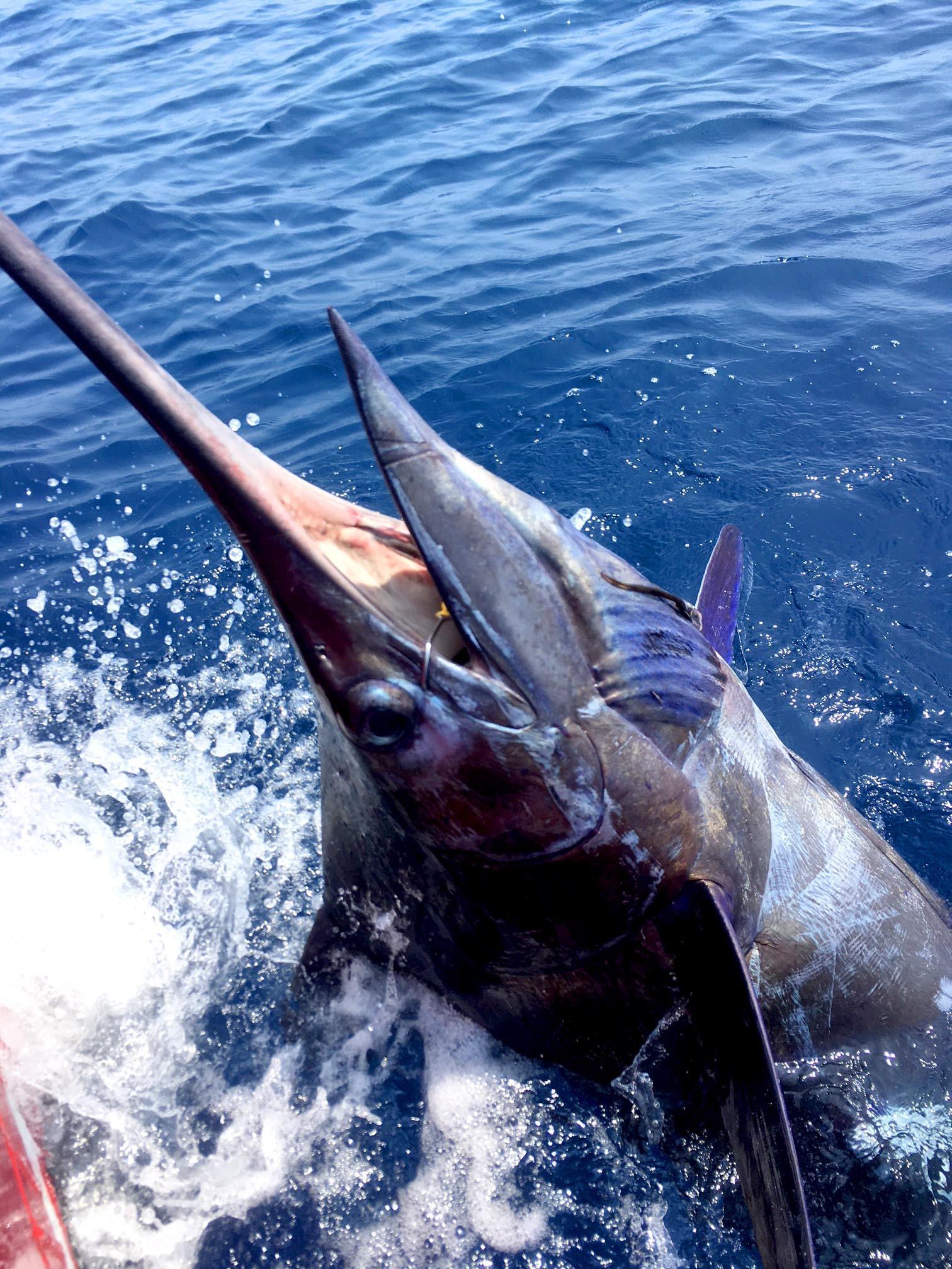8月最初の土日は全国で釣れまくり3東日本編_f0009039_18410698.jpg