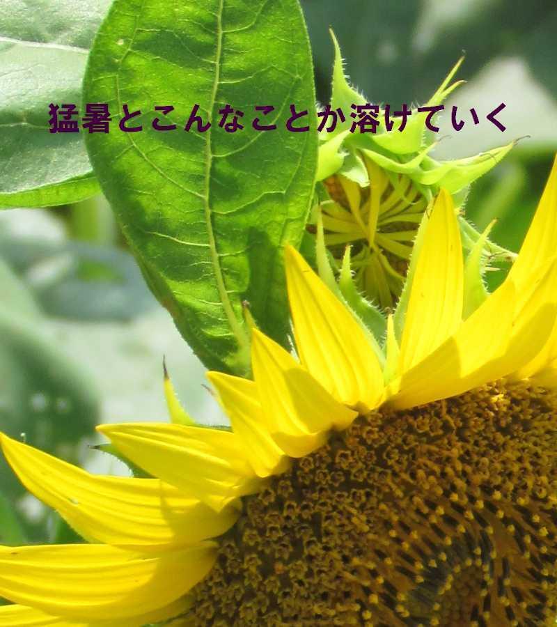 f0117041_05440324.jpg