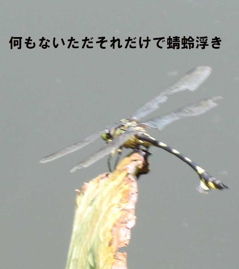 f0117041_05552501.jpg
