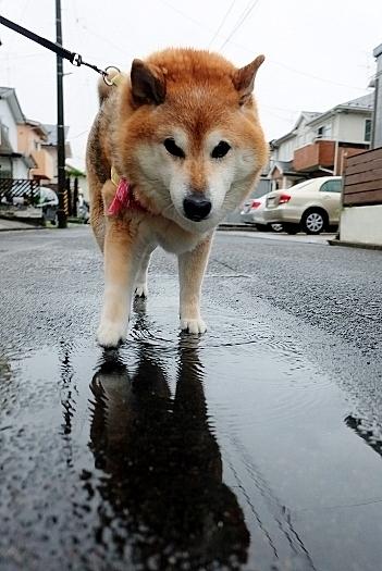雷雲  激しい雨  仙台七夕_b0314043_07184421.jpg