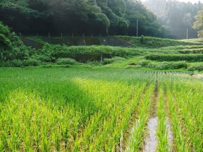 米作りへの挑戦!田植えから1ヶ月後の様子!成長に差が出てるんです・・・_a0254656_17100194.jpg