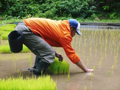 米作りへの挑戦!田植えから1ヶ月後の様子!成長に差が出てるんです・・・_a0254656_17180022.jpg