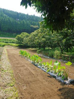 米作りへの挑戦!田植えから1ヶ月後の様子!成長に差が出てるんです・・・_a0254656_17291272.jpg