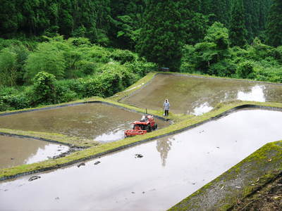 米作りへの挑戦!田植えから1ヶ月後の様子!成長に差が出てるんです・・・_a0254656_18130290.jpg