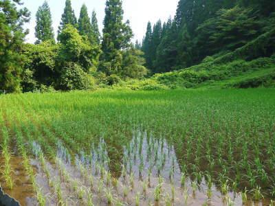 米作りへの挑戦!田植えから1ヶ月後の様子!成長に差が出てるんです・・・_a0254656_18241669.jpg