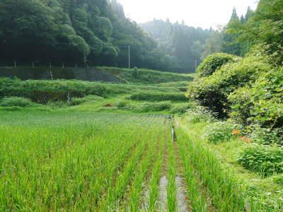 米作りへの挑戦!田植えから1ヶ月後の様子!成長に差が出てるんです・・・_a0254656_18274929.jpg
