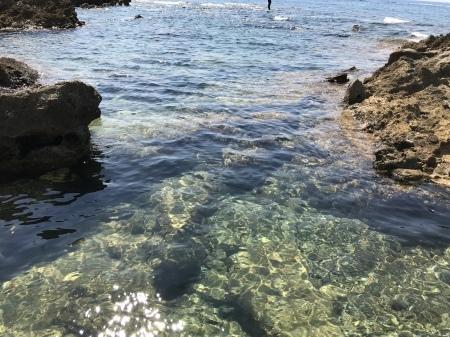 クラゲの季節です。_a0136671_01200088.jpeg