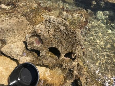 クラゲの季節です。_a0136671_01212394.jpeg
