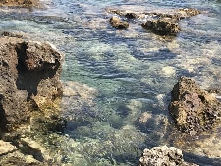 クラゲの季節です。_a0136671_01224709.jpeg