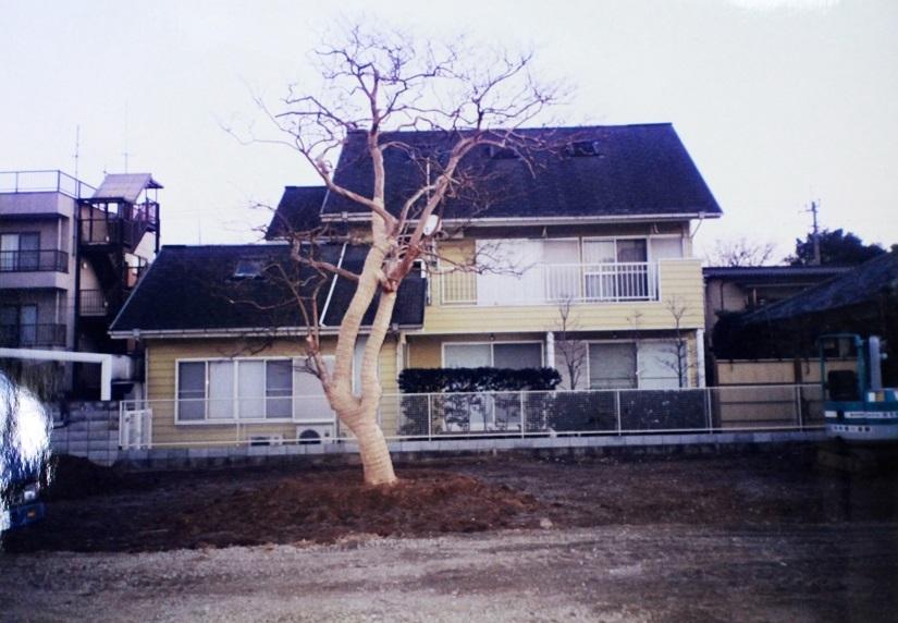家内の目標の応援が目標 ~百日紅移設・2000年~_a0107574_17035061.jpg