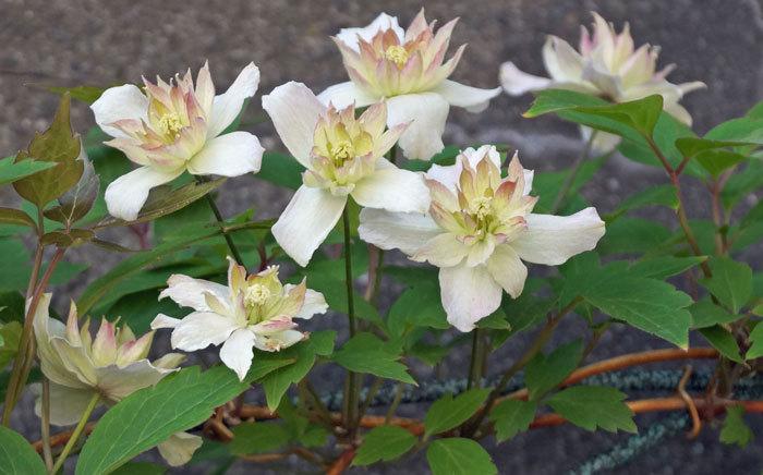 花いろいろ_d0162994_08395088.jpg