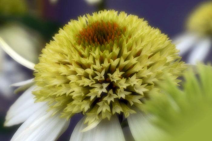花いろいろ_d0162994_08400788.jpg