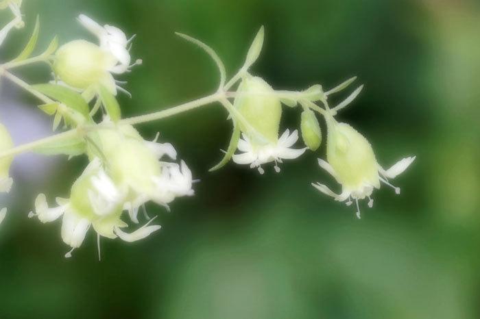 花いろいろ_d0162994_08402579.jpg