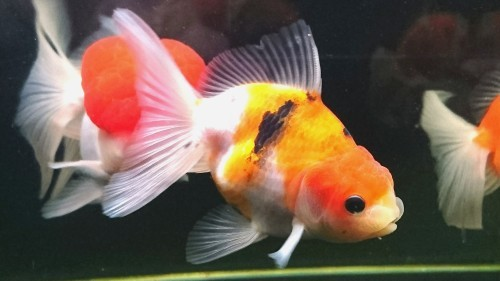 あいこさん購入魚紹介…part2_b0298605_04533237.jpg