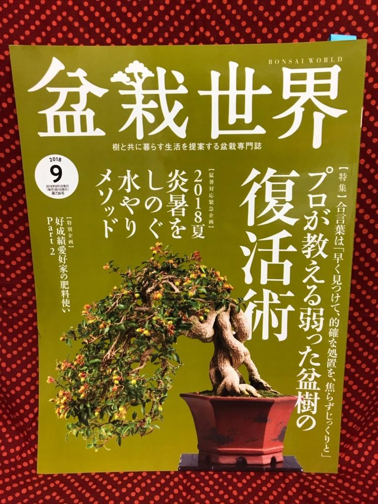 盆栽世界9月号_f0170915_15492302.jpg