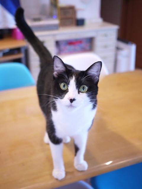 猫のお留守番 ぶぶちゃん編。_a0143140_23261825.jpg