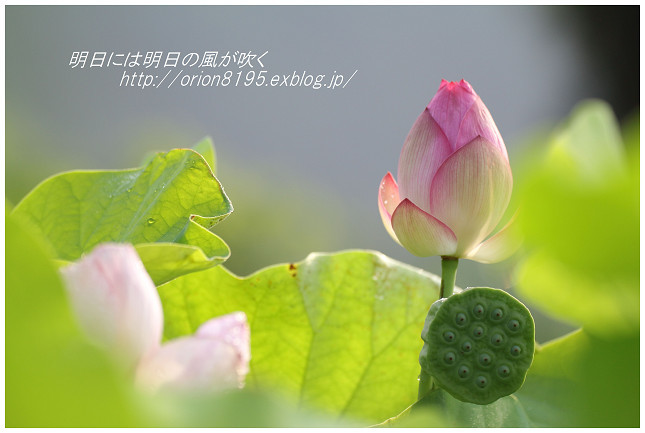 f0361079_19440279.jpg